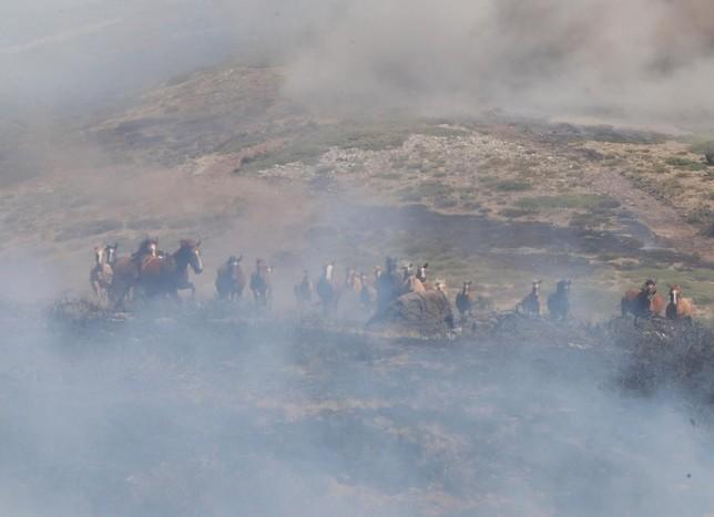 La historia de los 27 caballos que escaparon del fuego