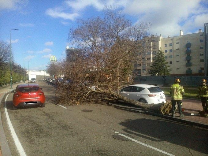 La tormenta alcanza rachas de 90 km/h y derriba 80 árboles