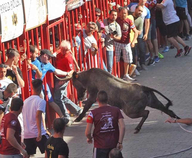 La vaca de Victorino Martín tuvo momentos de riesgo y peligro.