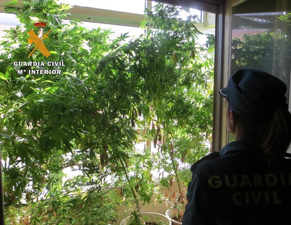 La Guardia Civil incauta 15 plantas de maría en una vivienda
