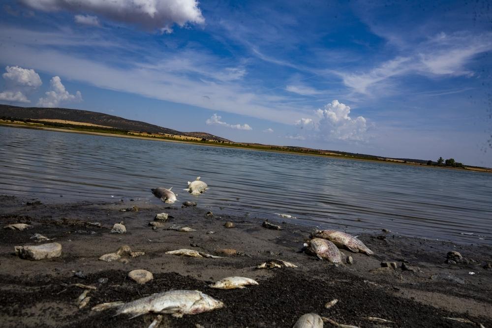 Nueva mortandad de peces en el Vicario