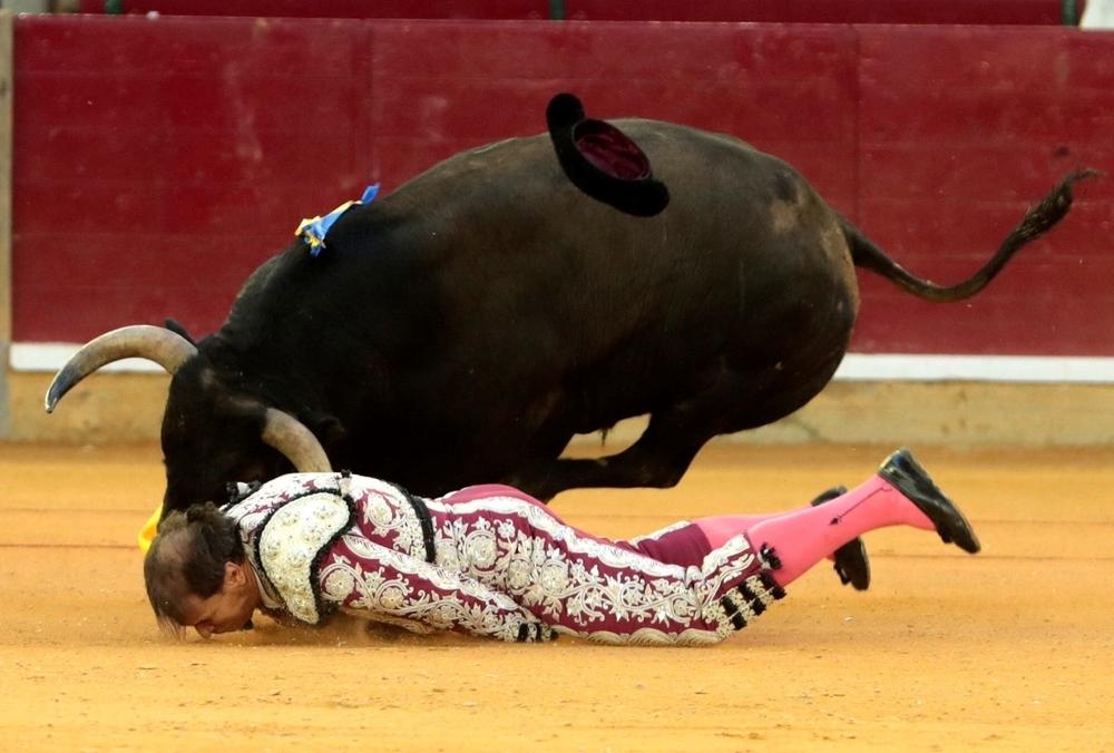 Mariano de la Viña, cogido de gravedad en Zaragoza