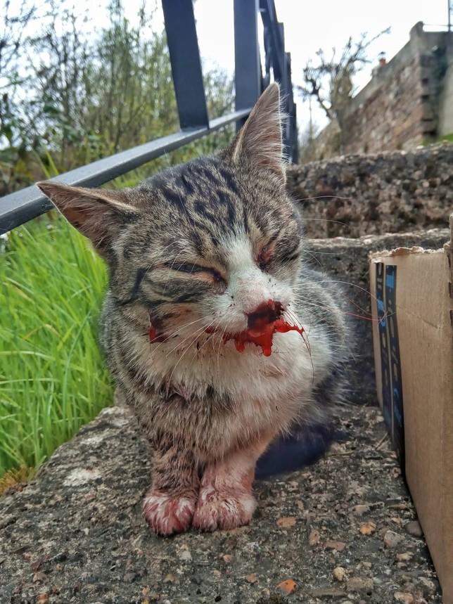 Nuevo caso de maltrato animal en Barruelo
