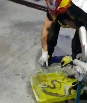 Los Bomberos capturan una culebra en una gasolinera