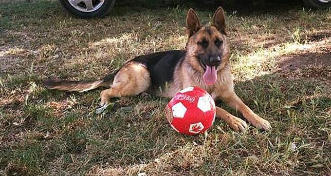 Imagen de la perra robada en la carretera de Villayerno.  DB