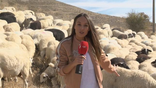 La periodista Noelia Duque entre un rebaño de ovejas