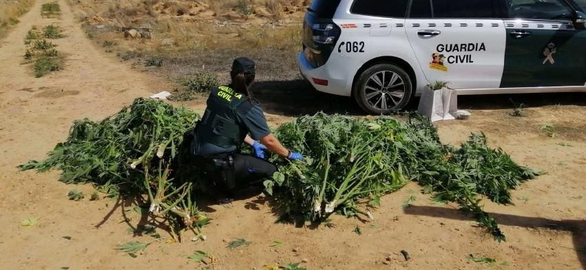 Localizan un punto de cultivo 'outdoor' de marihuana