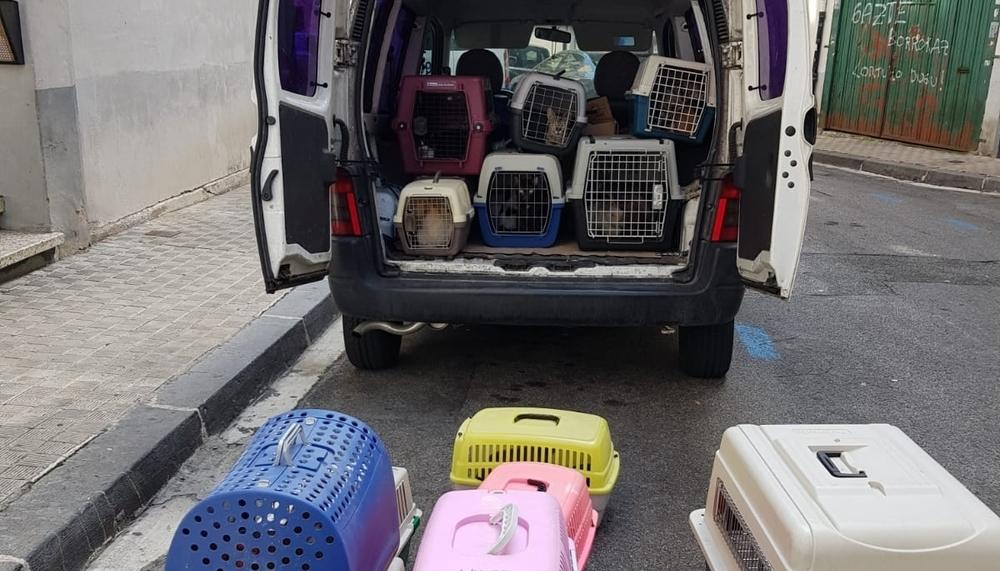 Rescatados, entre basura y amoníaco, 53 gatos de una bajera