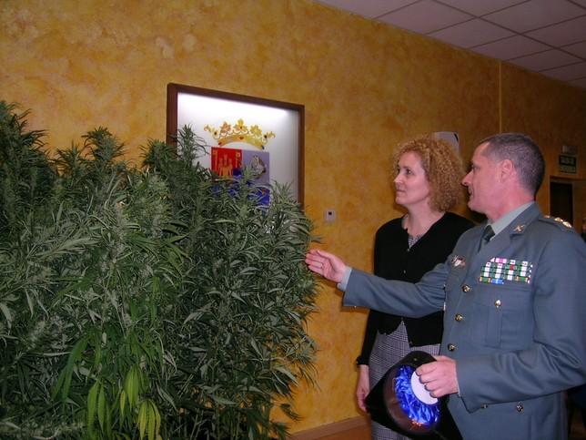 Hallan 400 plantas de marihuana en una casa de la provincia