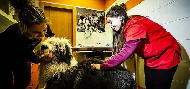 Alba García Rodera realizó sus prácticas en la Centro Veterinario de Covaresa.