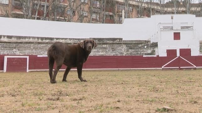 Una plaza de toros también para perros