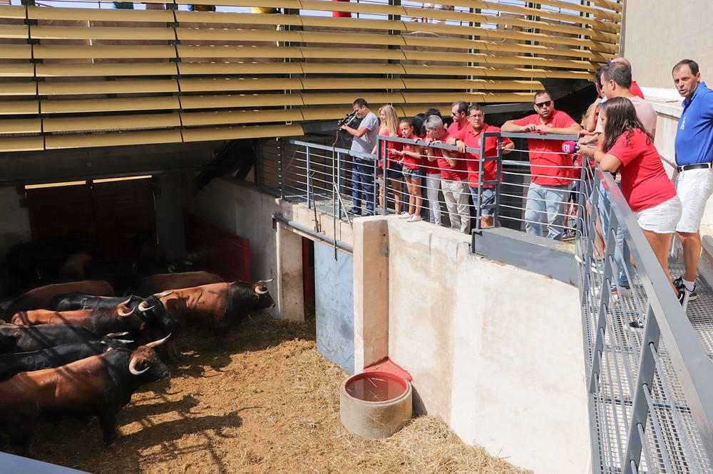 Un herido por asta de toro en los encierros de Almodóvar
