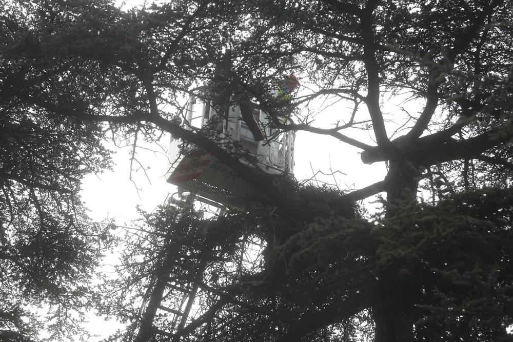 Los bomberos retiran un nido de cigüeñas en Valladolid