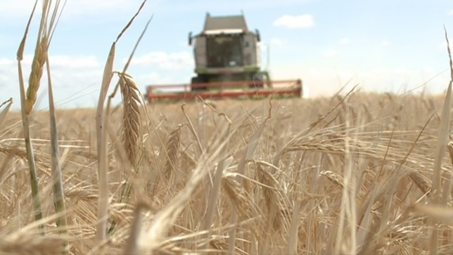 33 millones de pérdidas por la sequía en la cosecha