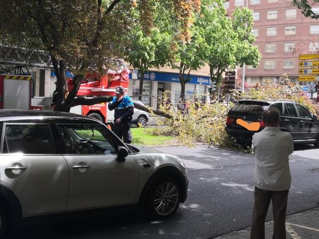 Una decena de salidas de bomberos por la caída de árboles