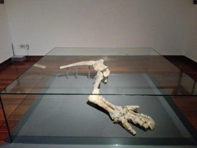El Iguanodonte paseaba por Soria hace 130 millones de años