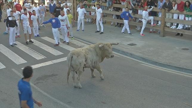 Un toro suelto siembra el pánico en el encierro de Tafalla