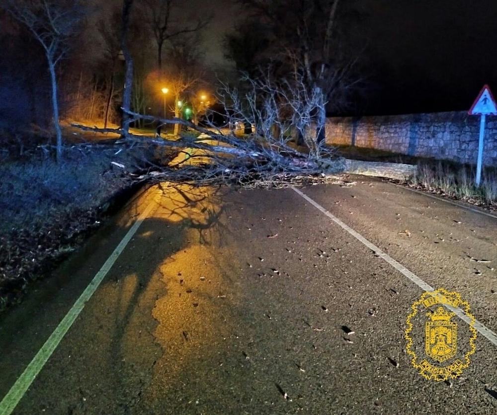 Árbol caído en la carretera de Fuentes Blancas.