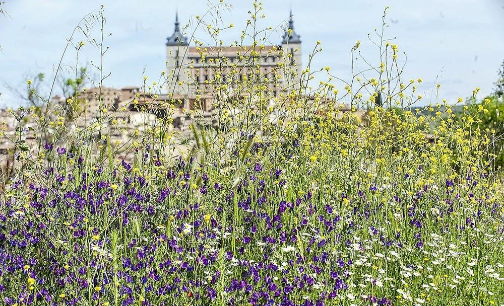 Toledo disfruta de una primavera de postal
