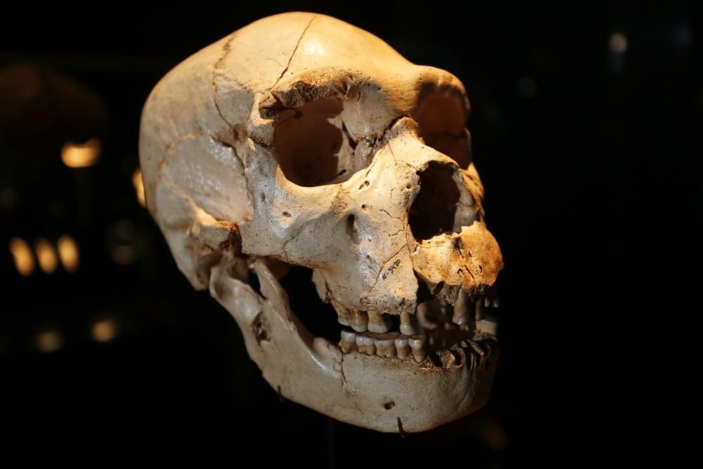 El cráneo de Miguelón vendrán a Toledo