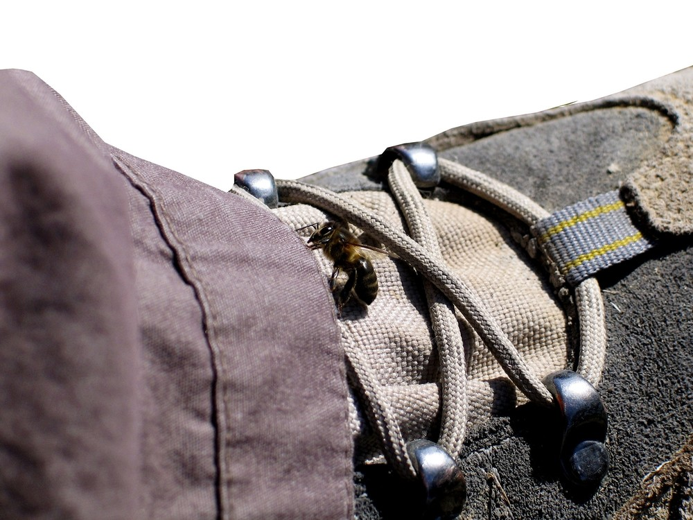 Humanos y abejas llevan relacionándose miles de años.