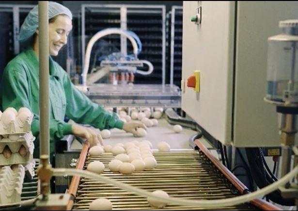 Empresas como Uvesa aumentan su producción
