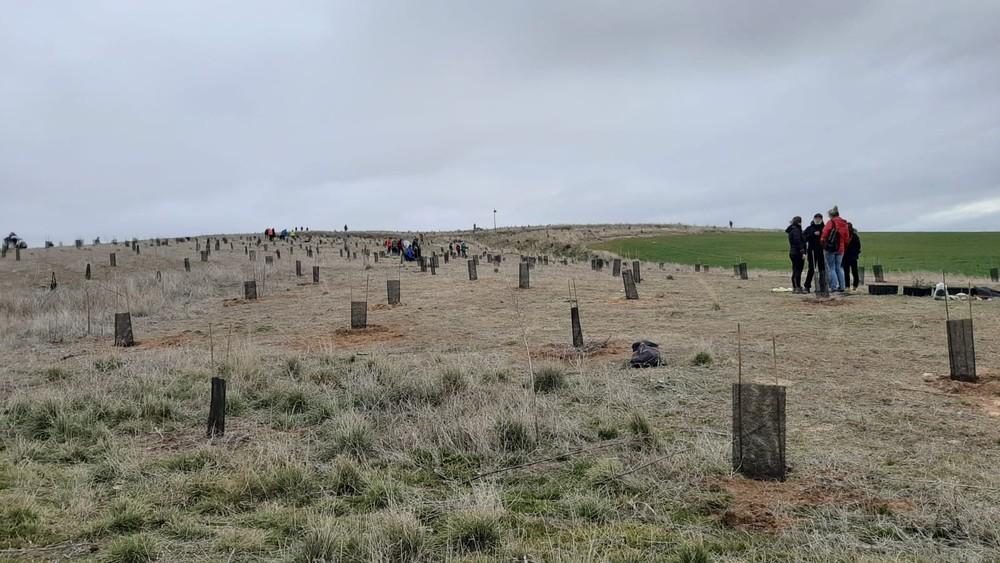1.500 plantas para reforestar el bosque de Encinillas