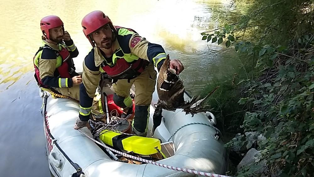 Los bomberos liberan a un ave enredada en sedales de pesca