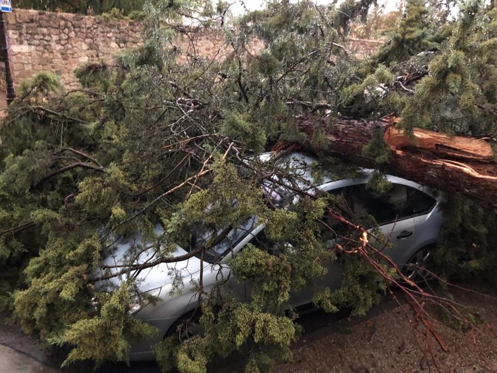 El árbol ha causado daños en varios vehículos aparcados.