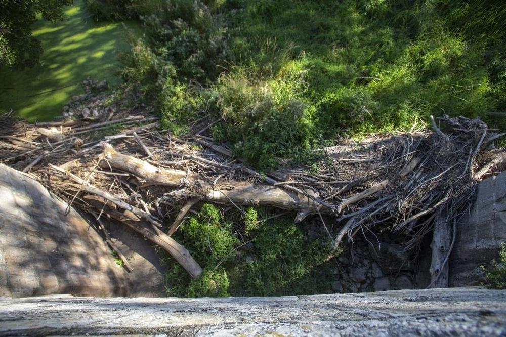 Vegetación y maleza junto al puente de Quintana