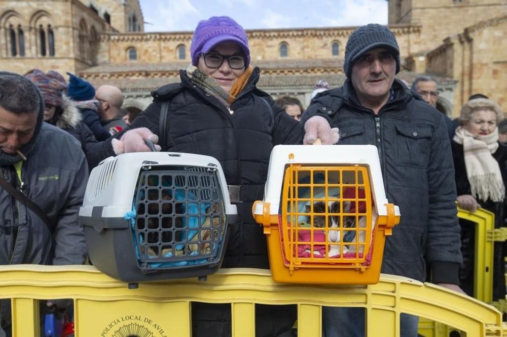 Mascotas en busca de protección