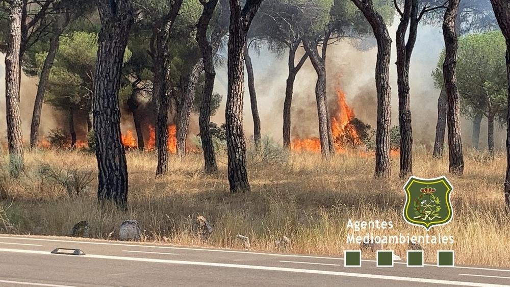 Un incendio en la zona de Entrepinos amenaza el pinar