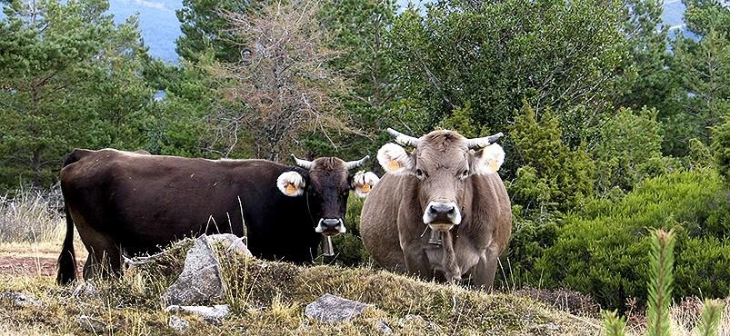 El pastoreo extensivo es una de las propuestas del Ministerio.