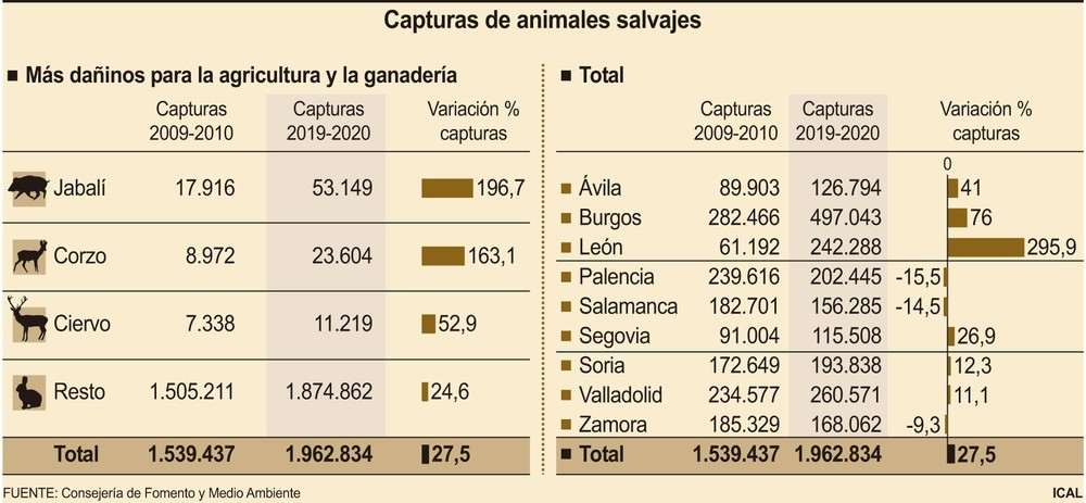 Las capturas de corzo o jabalí elevan un 27,5% la caza
