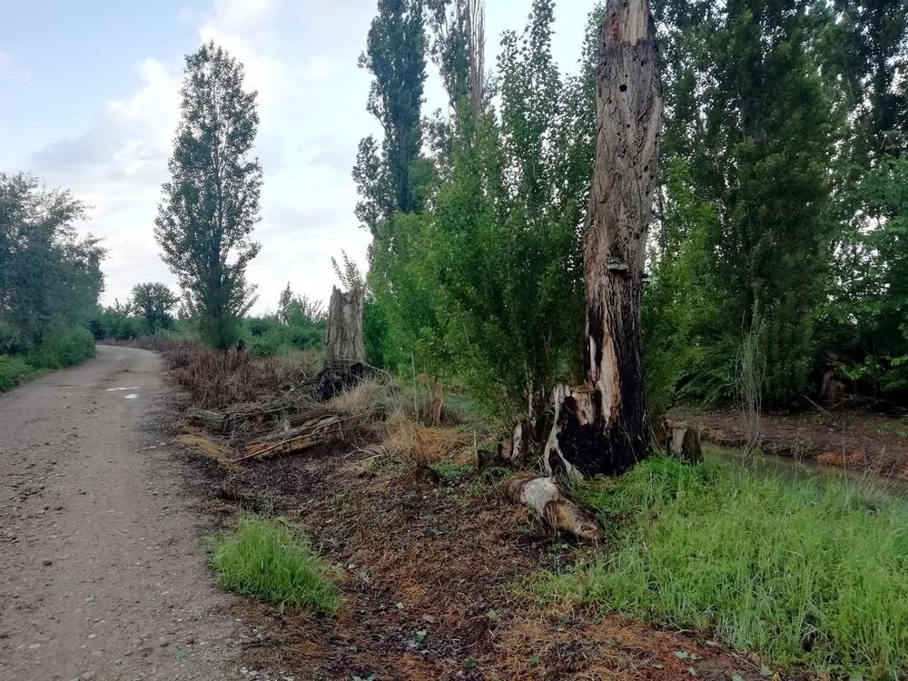 Denuncian daños por herbicidas en el Canal del Duero