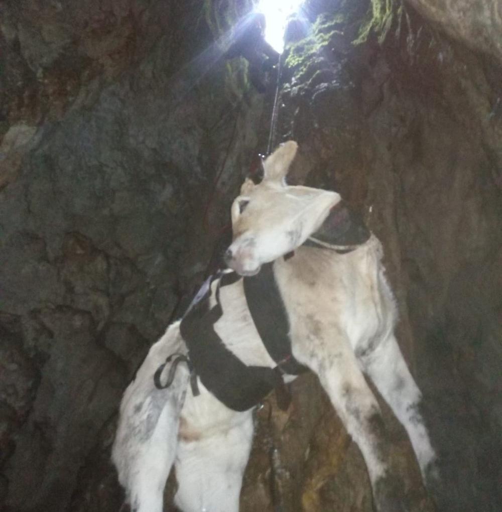 Rescatan a una ternera caída en una sima del Monte Dulantz