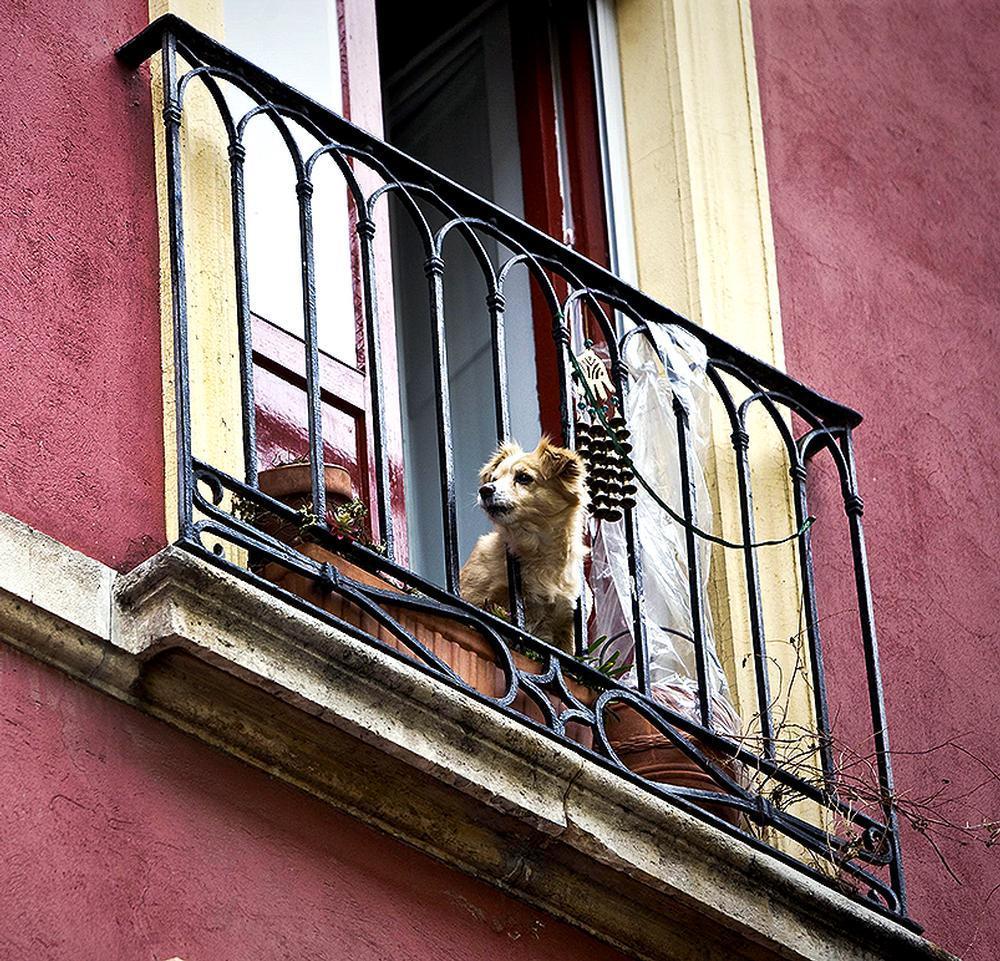 Ratificada la multa de 12.000 euros por ladridos de un perro