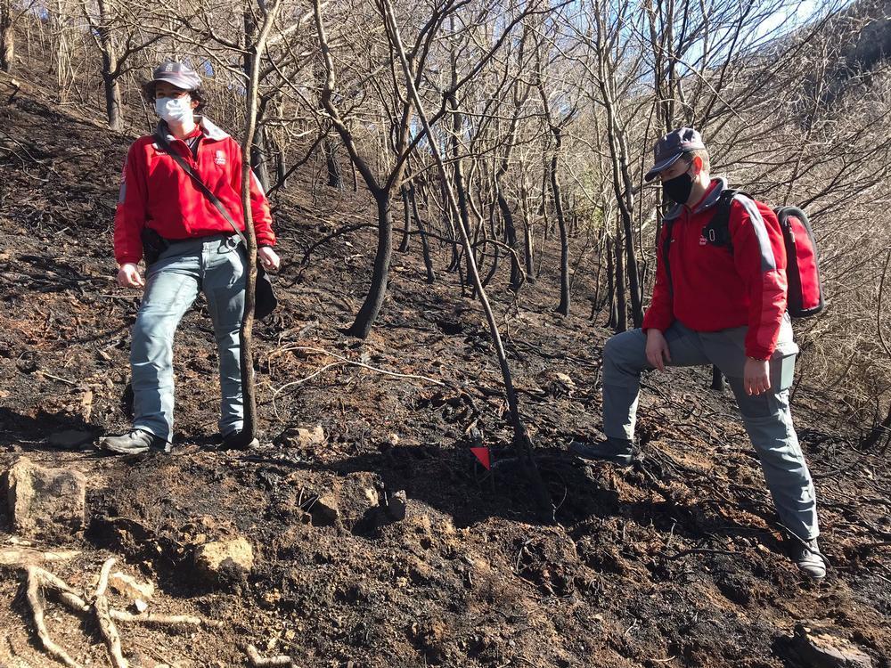 Arranca la investigación del incendio de Bera y Lesaka