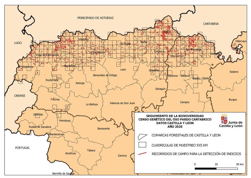 Concluyen los trabajos de campo del nuevo censo de osos