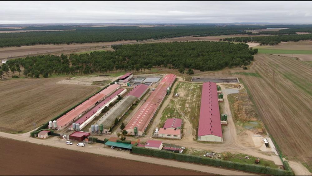 Innoporc tiene planes de modernización de granjas y generación de renovables por los que se ha aliado con empresas y entidades como Indra, Vodafone, Redexis Gas o el Instituto Tecnológico Agrario.