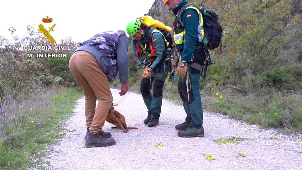 Rescatan a un perro en Lumbier a 45 metros de altura