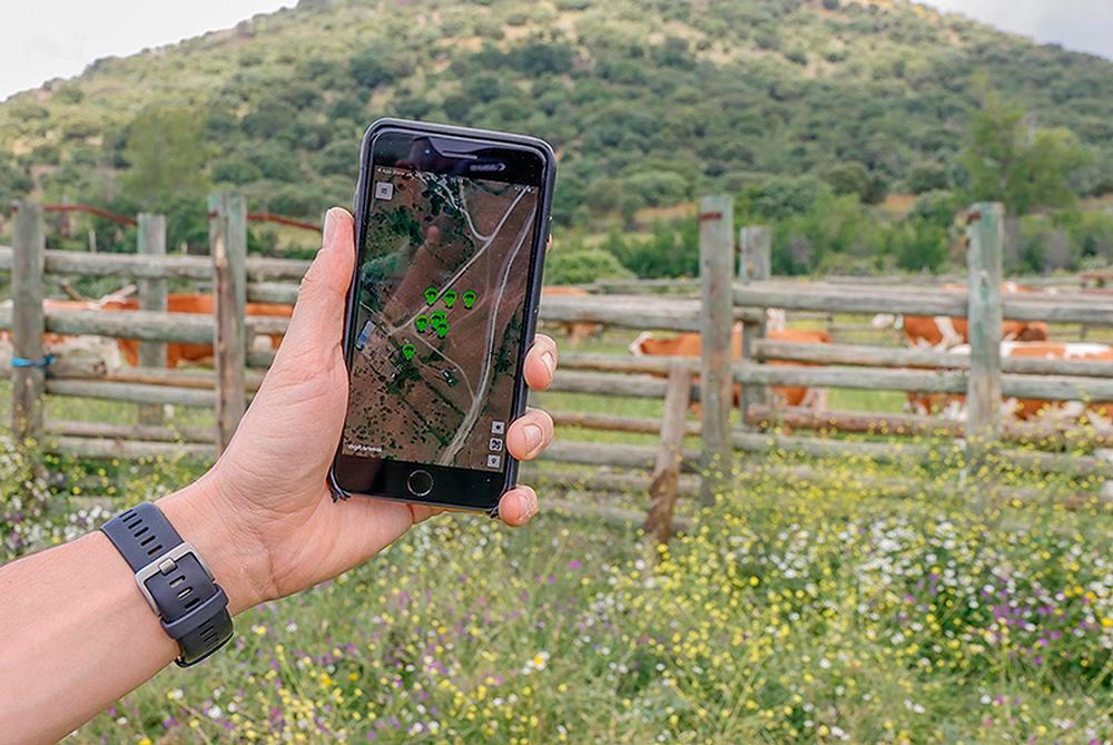 El ganado puede controlarse a través de una aplicación en el teléfono móvil.