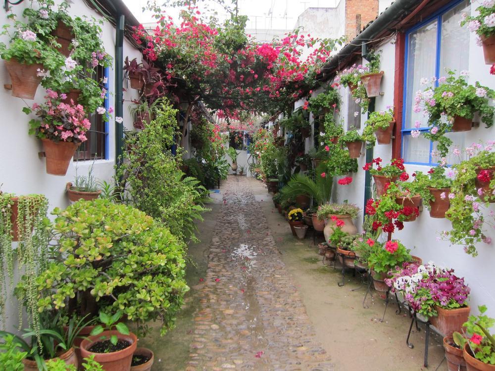 Córdoba recobra su fragancia