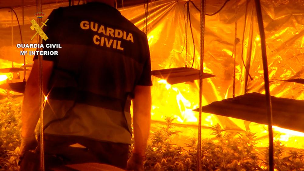 Domingo Pérez: buhardillas para la marihuana