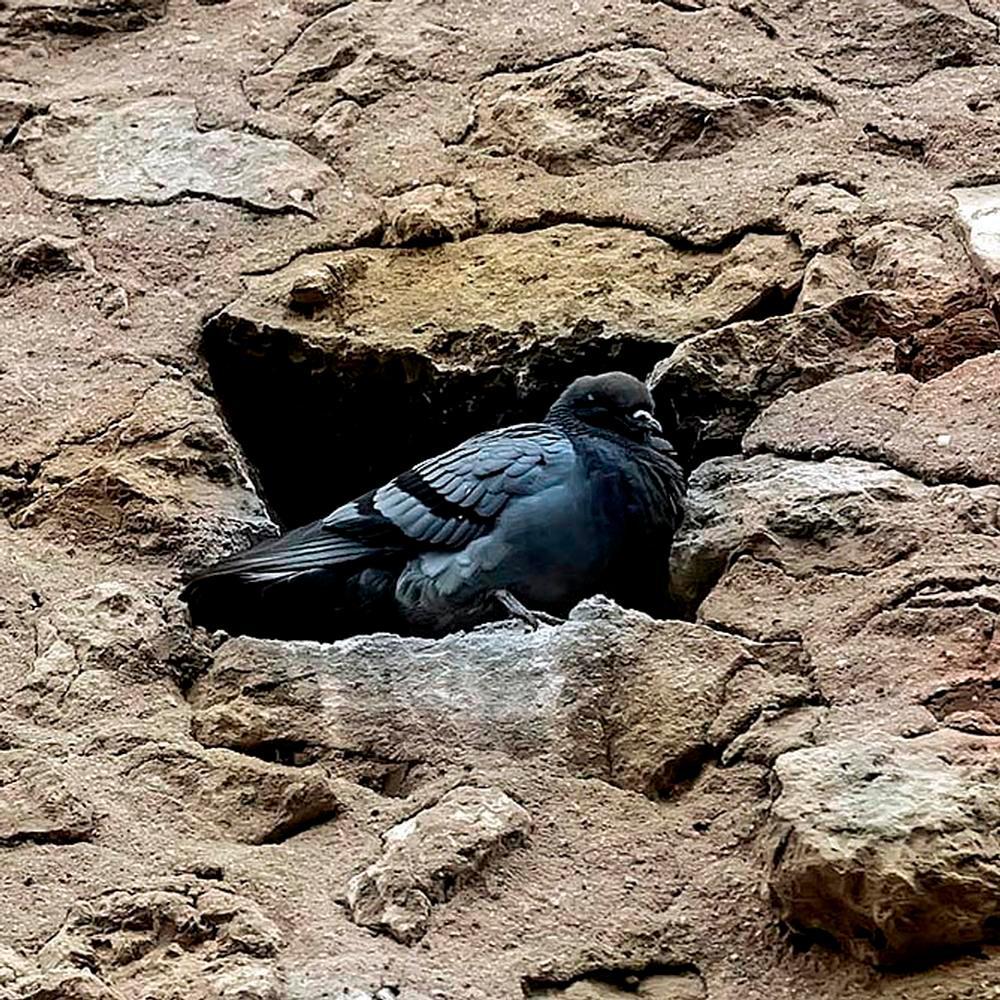 'Okupas' en la muralla de Segovia