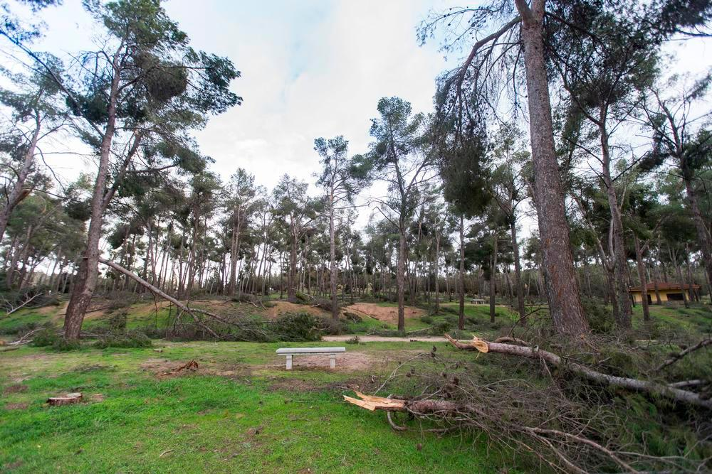 'Los pinos', como un campo de batalla