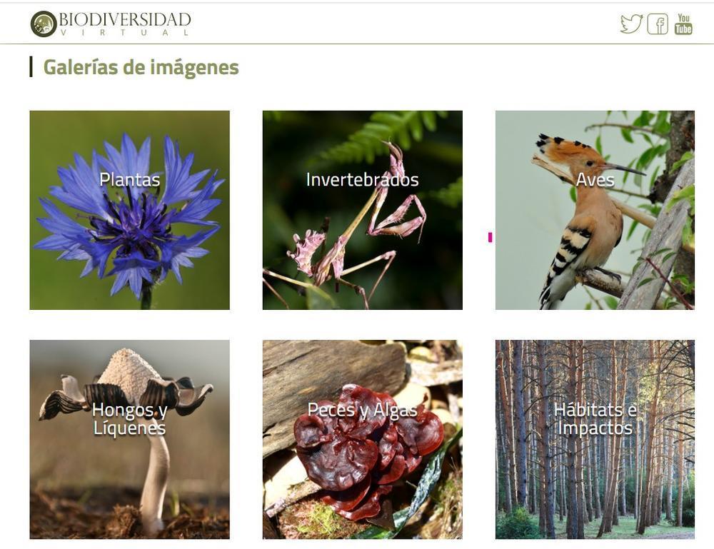 Detalle de la web de Biodiversidadvirtual.org