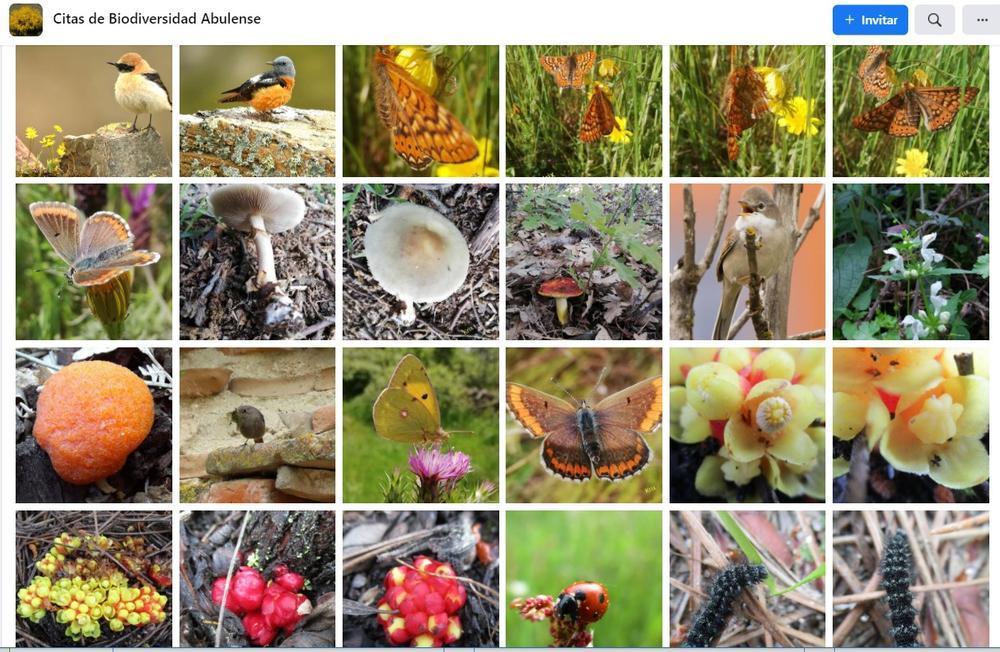 Algunas de las imágenes referenciadas en este grupo de facebook abulense