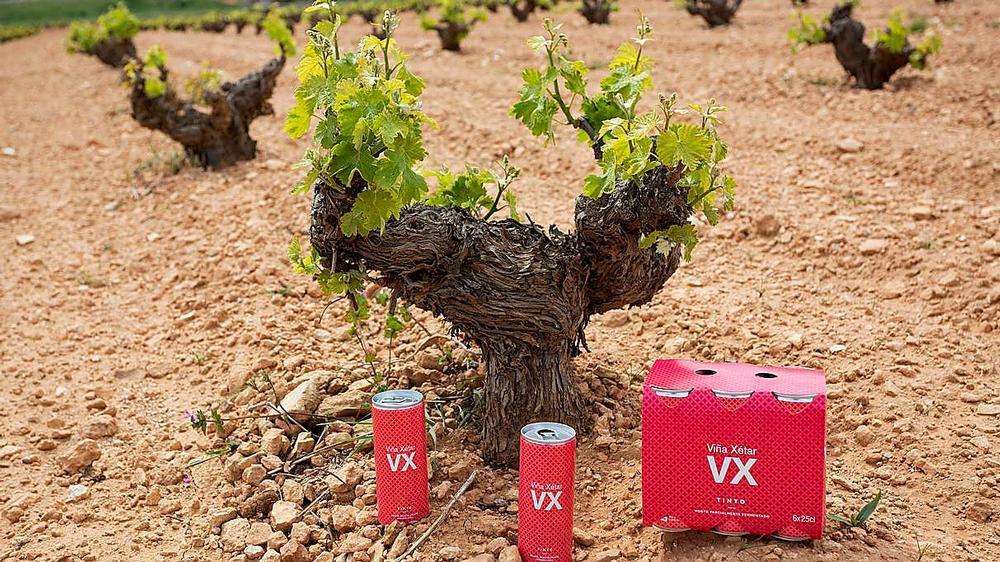 Viña Xétar en lata junto a las cepas donde se cultivan las uvas de la cooperativa El Progreso.