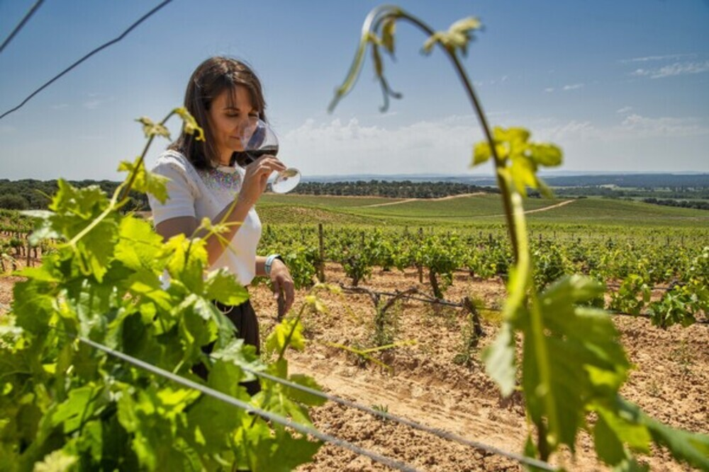 Moretón degusta una copa de vino en el viñedo.